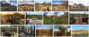 Caatinga Overview