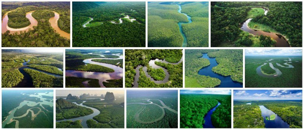 The Internationalization of the Amazon
